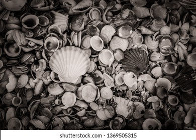 black and white, shells on a Beach