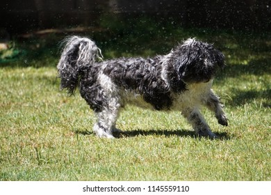 Dog in Sprinkler Images, Stock Photos & Vectors | Shutterstock