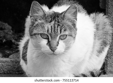Black and white shot of cat look,female cat at rest (Sardinia - Italy)