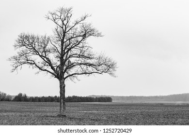 Black and white shot of a naked tree in a field