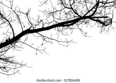 black and white of silhouette of branch of tree