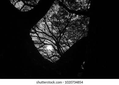 black and white silhouette of tree branches and the sun