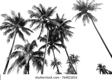 Black and white silhouettes tropical coconut palm trees isolated in white background