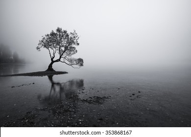 A black and white single lonely tree in a misty morning sits in the beautiful Lake Wanaka, New Zealand
