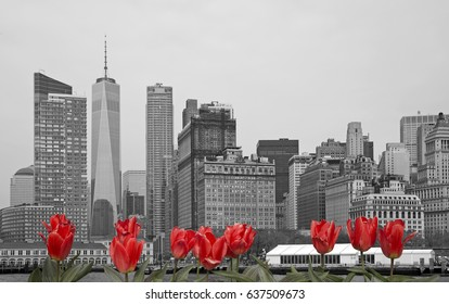 Black and white skyline of New York city with red tulips on front