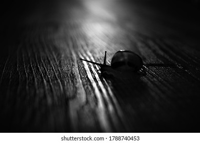 Black and white snail silhouette with slimy trail