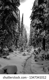 Black and white snowshoeing trail on Silver star mountain in Vernon BC