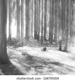 black and white snowy woods on a sunny day in winter landscape