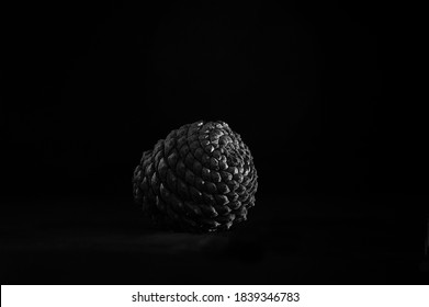 Black and white still life of a pine cone