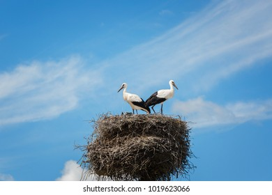 Black and white storks in nest on the blue sky background