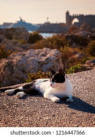 Black and white stray cat in Rhodes town harbour.