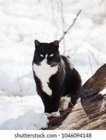 Black and white street cat