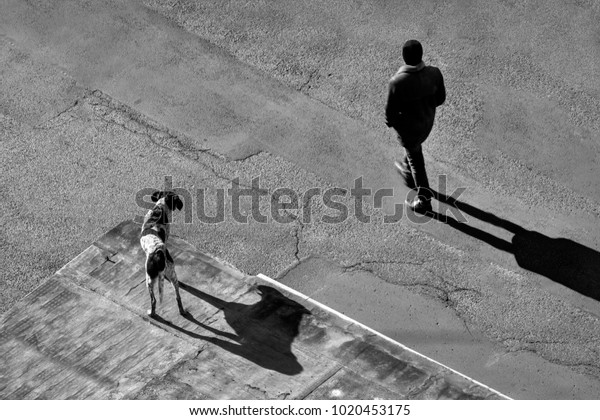 black and white street photography with dog standing on the roof of garage and looking at the man walking on the asphalt road, abstract image with silhouettes and shadows