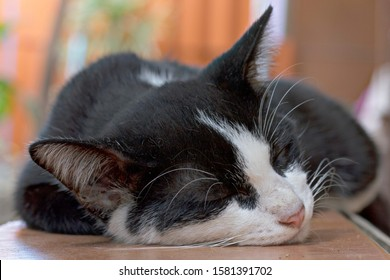 Black and white striped cats are sleeping comfortably.