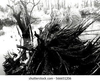 Black and white strong contrast landscape of a burnt wood with water.