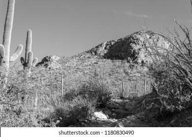 Black and white study of a hiking trail or running path in the mountains of the Sonoran desert with saguaro cactus, cholla, prickly pear, barrel cacti and other flora. Tucson, Arizona. Spring 2018
