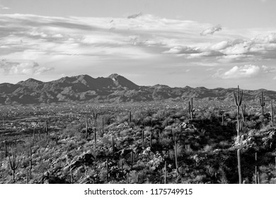 A black and white study of Oro Valley, Arizona from the Linda Vista trail. A saguaro cacti covered hill with mountains in the distance and puffy clouds in the sky. Spring 2018. Pima County.