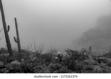 A black and white study of the Sonoran desert shrouded in a rare fog. The misty landscape features saguaro, cholla, prickly pear, and other cacti in an ethereal haze. Tucson, Arizona. Spring of 2018.