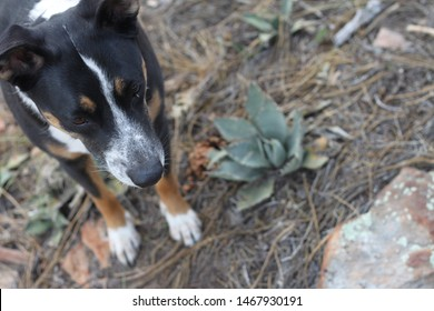 a black white and tan dog in the forest 8465
