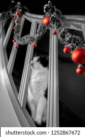 black and white tomcat sits on a vintage staircase and looks through the struts of the railing that is decorated with Christmas garland and red balls, he is licking his nose with his tongue