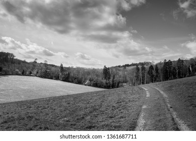 black and white track in English field with pine forest in background