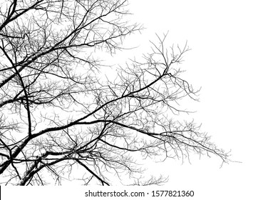 Black and white tree branch silhouette on a white background