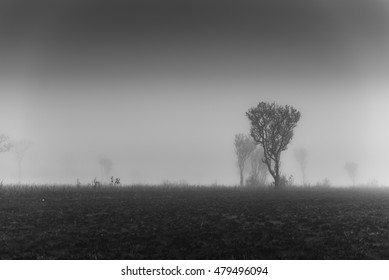 Black & White, Tree in fog, Salang Luang national park, phetchabun, Thailand