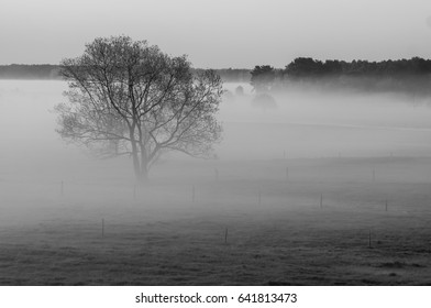 Black and white tree isolated on a misty morning
