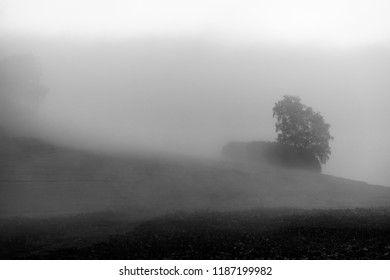 Black and white tree in meadow immsersed in morning mist