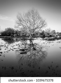 black and white tree reflections without branches in wetland near the river