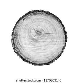 Black and white tree rings. Tree stump with annual rings as a wood pattern.
