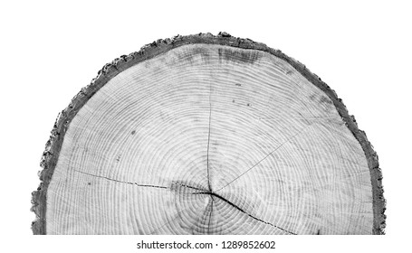Black and white tree rings. Tree stump with annual rings as a wood pattern