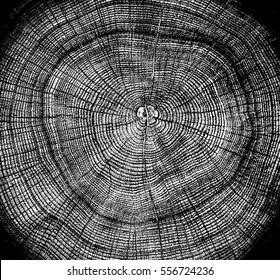 Black and white tree rings. Tree stump with annual rings as a wood pattern. Background texture or alpha channel.