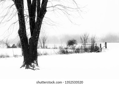 Black and White Tree Scene with Snow Covered Ground and Field Background