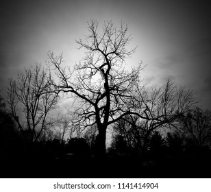 A black and white tree under an evening sky. Dark and creepy.