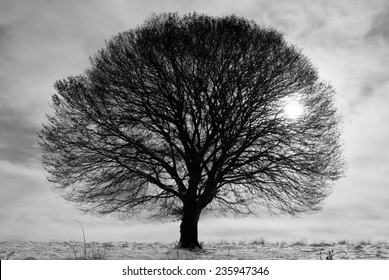 Black and white tree at winter time