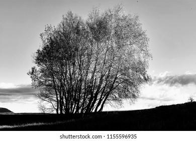 Black and white trees on the horizon.