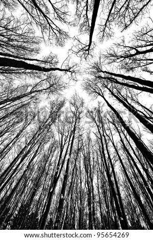 Black White Trees Silhouettes Stock Photo Edit Now 95654269