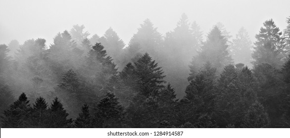 black and white treetops