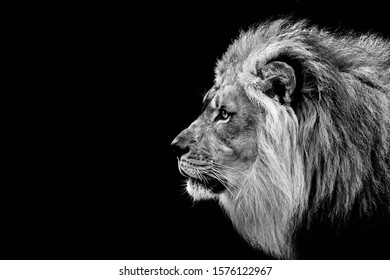Black and white version of a lion.