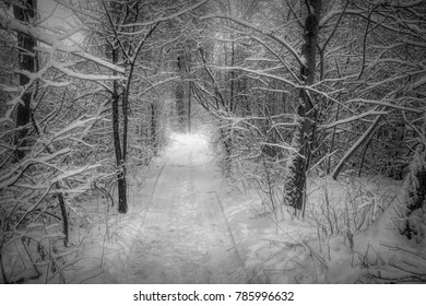 A Black and White view from Christmas Eve afternoon, while walking a path in the woods after a fresh snowfall, near Ridgeway, Ontario.
