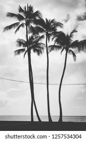 Black and white view of four palm trees crossed by some kind of electric wires hanging. Hawaii, US