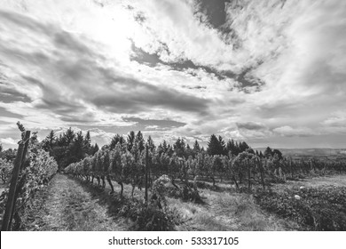 Black and white view of a vineyard on a partly cloudy day