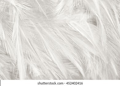 Black and white vintage color trends feather texture background