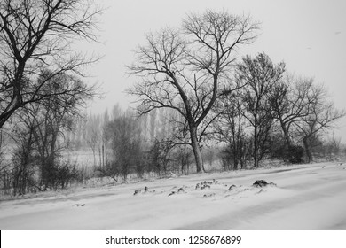 Black and white winter landscape with trees during a blizzard