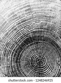 Black and white wooden oak tree cut surface. Detailed warm dark brown and orange tones of a felled tree trunk or stump. Rough organic texture of tree rings with close up of end grain.