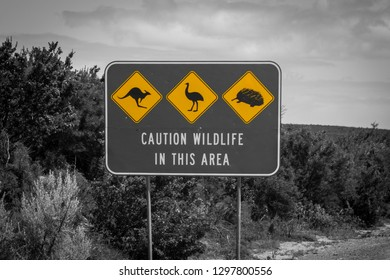Black white and yellow accent of caution wildlife sign in Australia - artistic coloration