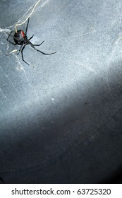 A Black Widow spider in her web under a metal lid.