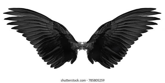 black wings of bird on white