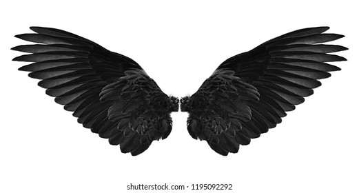 black wings isolated on a white background